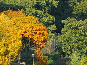 vue-d-automne